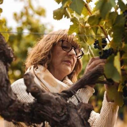 Prue Henschke looking at a bunch of berries in the vineyard